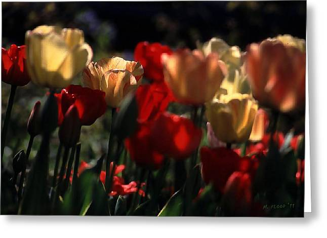 Greeting Card featuring the photograph Tulips In Morning Light by Michael Flood