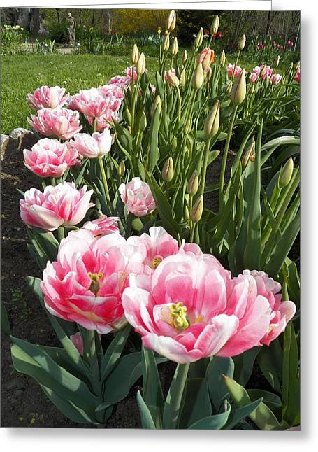 Tulips In Pink Greeting Card