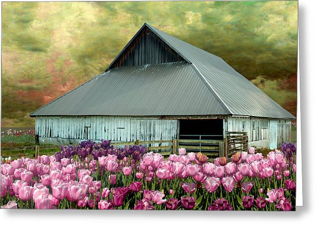 Tulips In Skagit Valley Greeting Card by Jeff Burgess