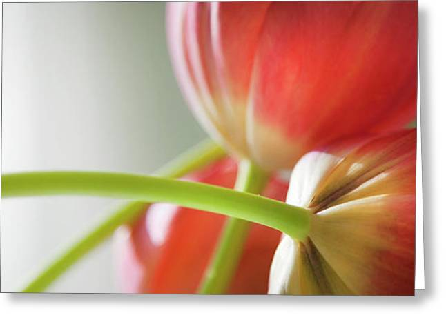 Tulips In The Morning Greeting Card by Theresa Tahara