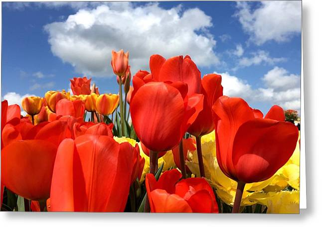 Tulips In The Sky Greeting Card