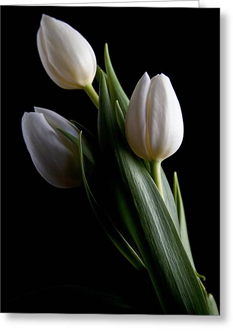 Tulips Iv Greeting Card by Tom Mc Nemar