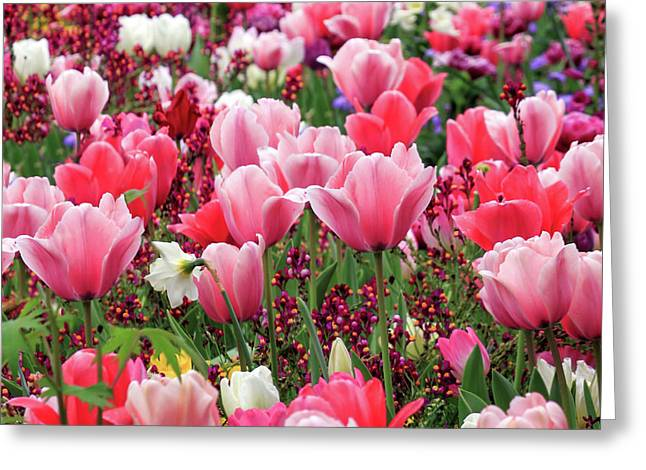 Greeting Card featuring the photograph Tulips by James Eddy