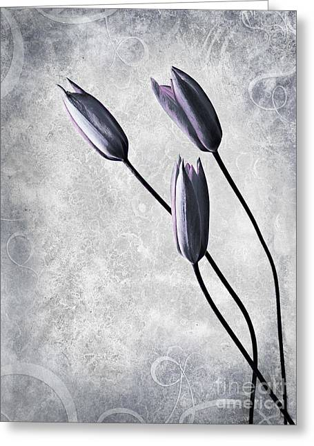 Tulips Greeting Card by Jacky Gerritsen