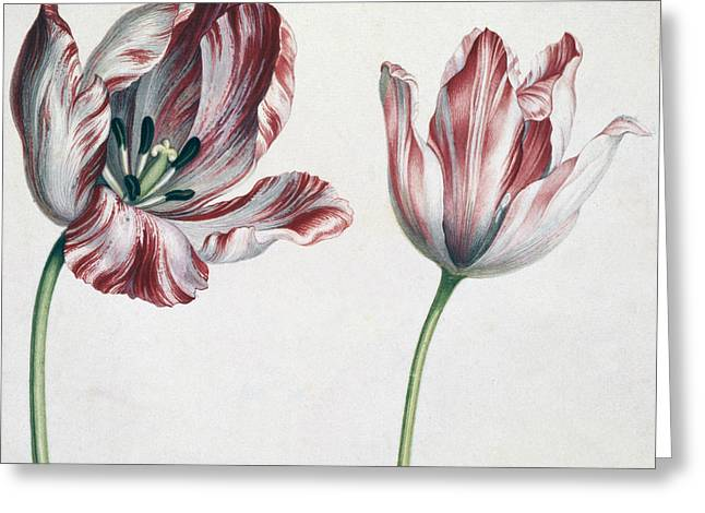 Tulips Greeting Card by Simon Peeterz Verelst