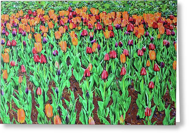 Tulips Tulips Everywhere Greeting Card