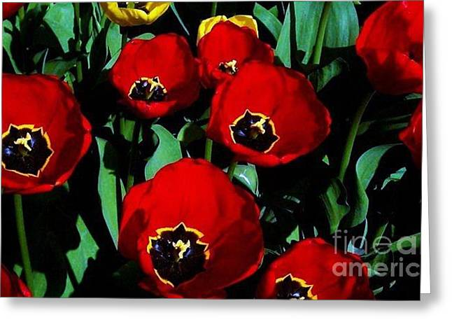 Greeting Card featuring the photograph Tulips by Vanessa Palomino