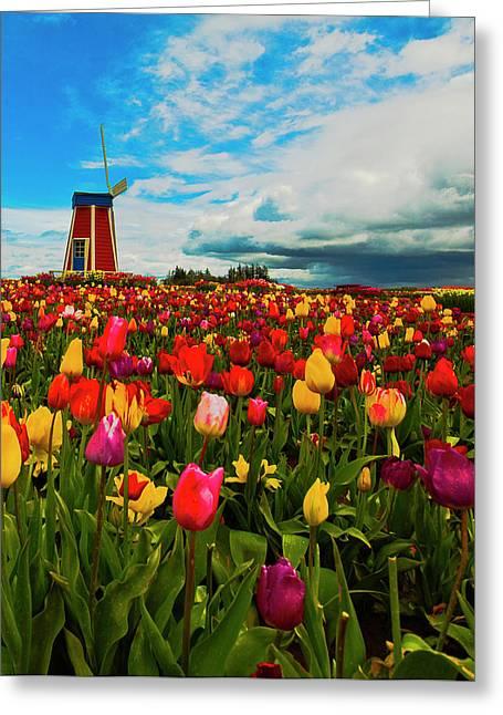 Tulips Windmill 2 Greeting Card