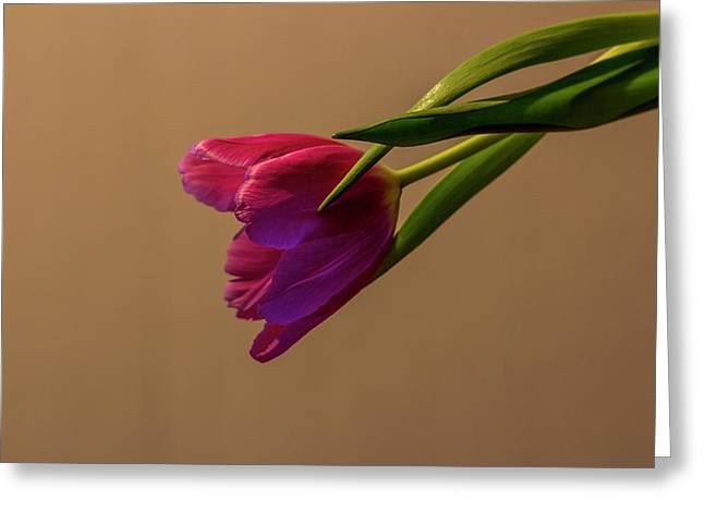 Tulpe_20 Greeting Card by Jacqueline Schreiber