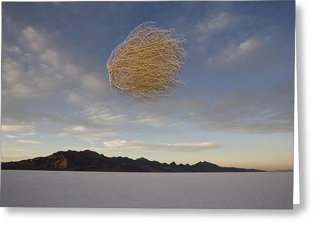 Flash Greeting Cards - Tumbleweed In Mid Air Greeting Card by John Burcham