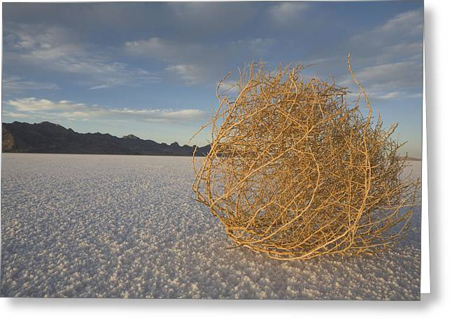 Salt Flat Images Greeting Cards - Tumbleweed On The Bonneville Salt Greeting Card by John Burcham