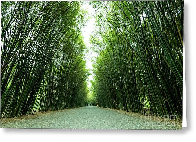 Greeting Card featuring the photograph Tunnel Bamboo Trees And Walkway. by Tosporn Preede