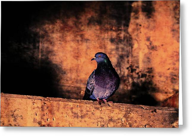 Tunnel Pigeon Greeting Card