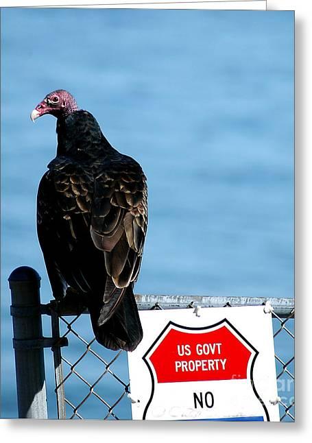 Turkey Buzzard Greeting Card