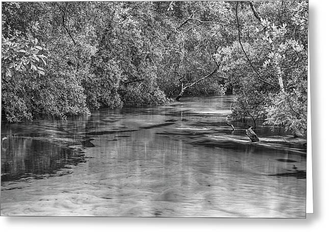 Turkey Creek In Black And White Greeting Card