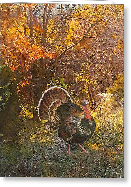 Turkey In The Woods Greeting Card