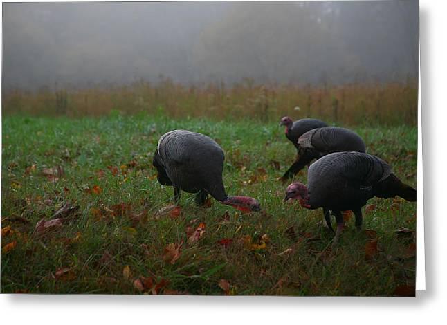 Turkey On A Foggy Morning Greeting Card by James Jones