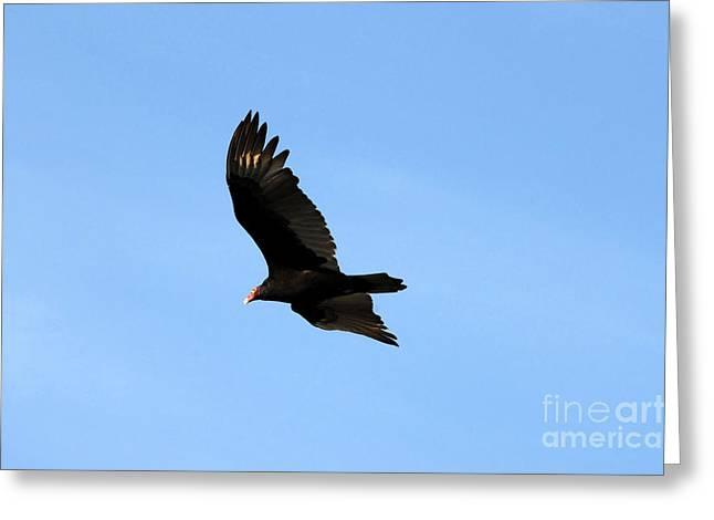 Turkey Vulture Greeting Card by David Lee Thompson