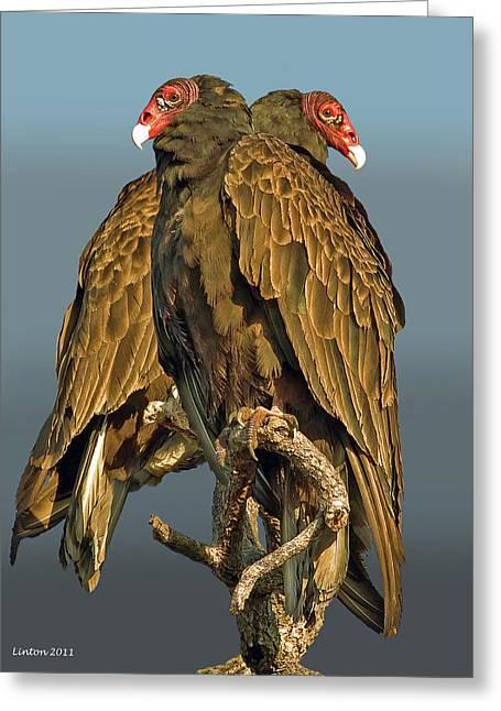 Turkey Vultures 2 Greeting Card