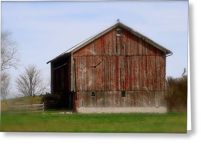 Turkey Vultures Hovering Around The Barn Greeting Card