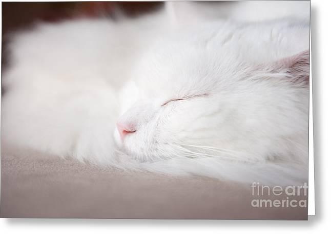 Turkish Angora Cat Face Closeup Greeting Card by Arletta Cwalina