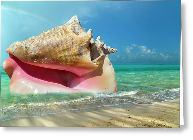 Conchquered Greeting Card