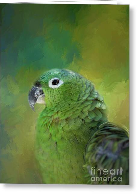 Turquoise-fronted Amazon Greeting Card