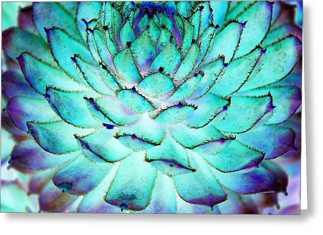 Turquoise Succulent 1 Greeting Card by Marianne Dow