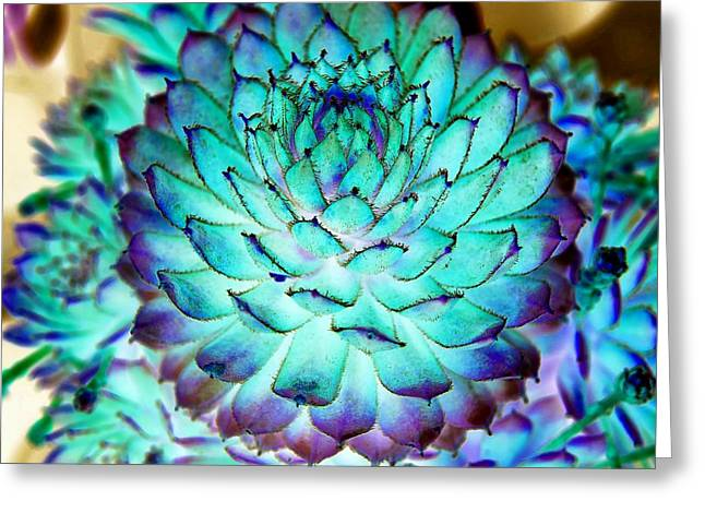 Greeting Card featuring the photograph Turquoise Succulent 2 by Marianne Dow