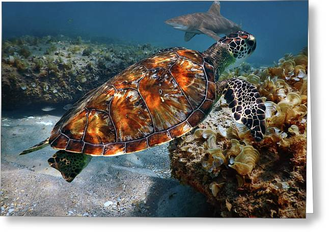 Greeting Card featuring the photograph Turtle And Shark Swimming At Ocean Reef Park On Singer Island Florida by Justin Kelefas