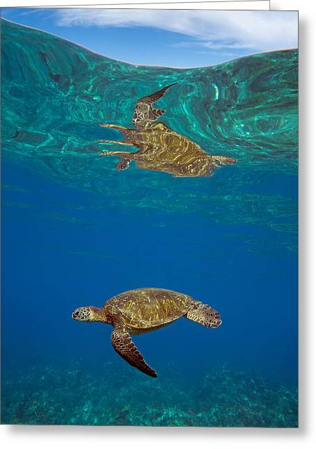 Turtle And Sky Greeting Card