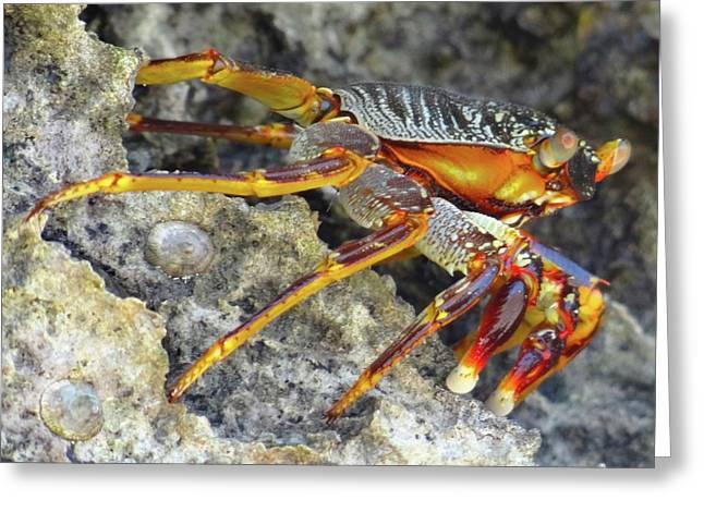 Turtle Bay Resort Watamu Kenya Rock Crab Greeting Card by Exploramum Exploramum