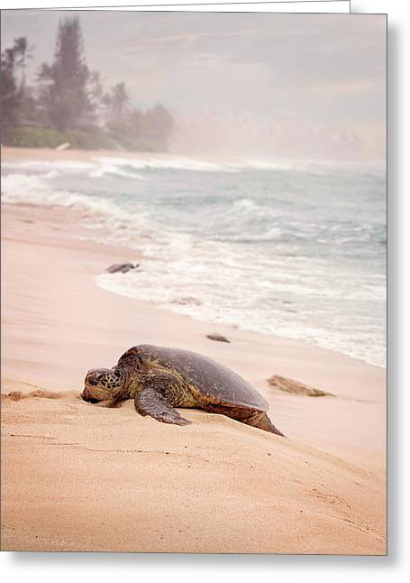 Turtle Beach Greeting Card by Heather Applegate