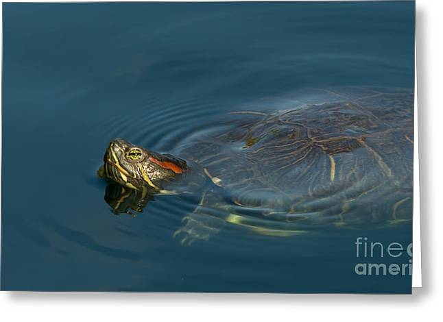 Turtle Floating In Calm Waters Greeting Card