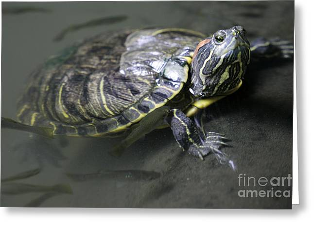 Turtle Greeting Card by Mopics