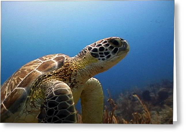 Turtle- The Long Living Animal Greeting Card by Peter Parker