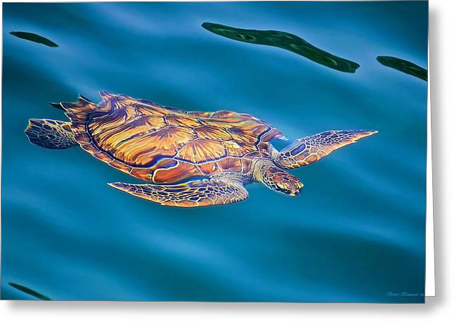 Turtle Up Greeting Card