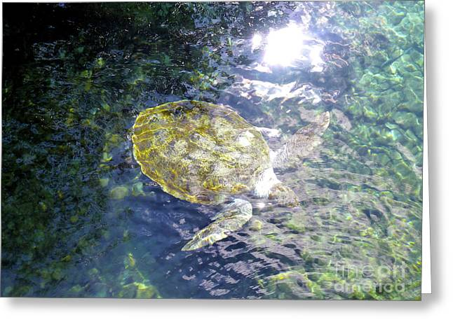 Greeting Card featuring the photograph Turtle Water Glide by Francesca Mackenney