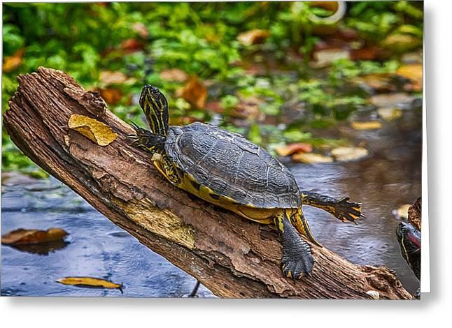 Turtle Yoga Greeting Card by John Haldane
