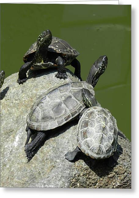 Greeting Card featuring the photograph Turtles At A Temple In Narita, Japan by Breck Bartholomew