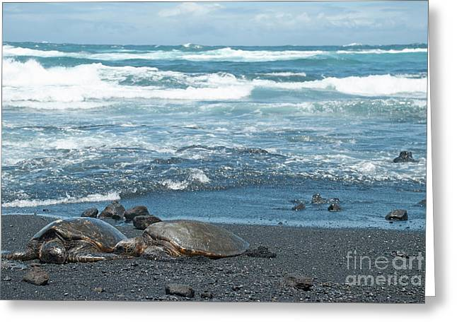 Turtles On Black Sand Beach Greeting Card