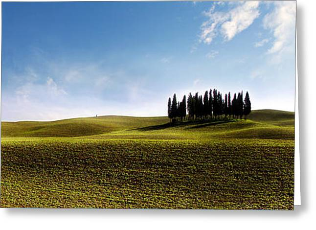 Tuscan Cypress Tree Greeting Card