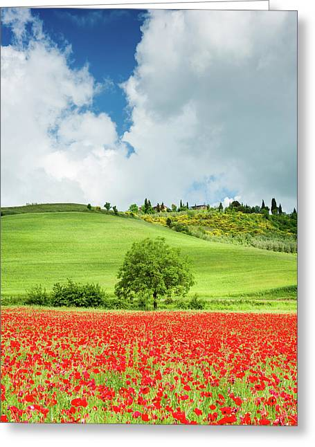 Tuscan Poppies - Vertical Greeting Card by Michael Blanchette