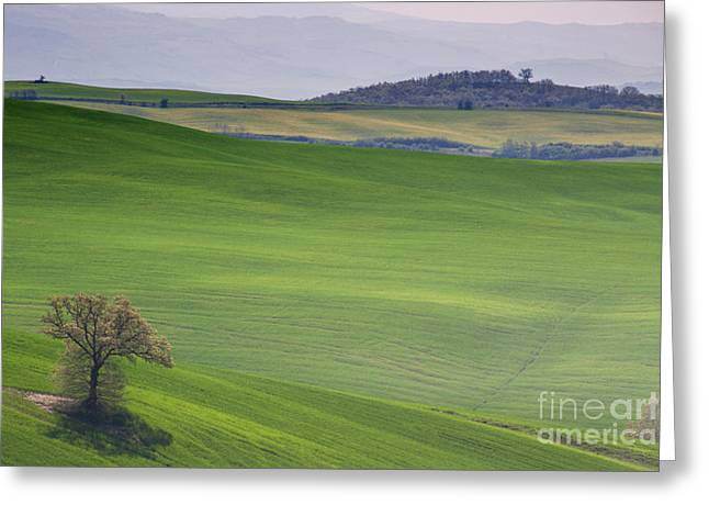 Tuscany Landscape Greeting Card by Ana Mireles