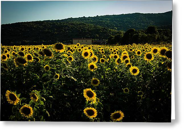 Tuscany - Sunflowers At Sunset Greeting Card