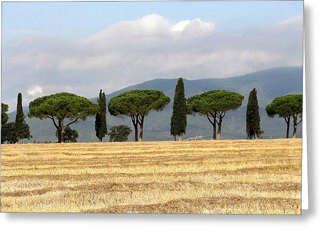 Tuscany Trees Greeting Card