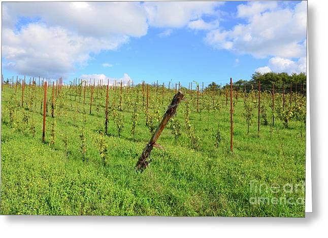 Tuscany's Vineyards And Green Landscape Greeting Card by DejaVu Designs