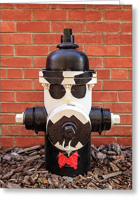 Greeting Card featuring the photograph Tuxedo Hydrant by James Eddy