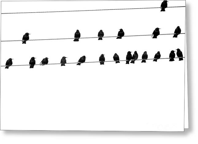 Twenty Blackbirds Greeting Card