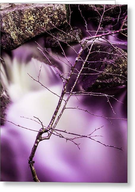 Twig At The Waterfall In Hdr Greeting Card